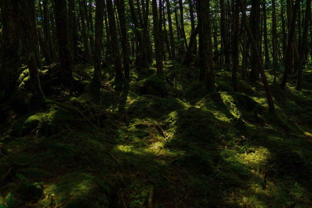レタッチ後の白駒池で撮影した森林の写真