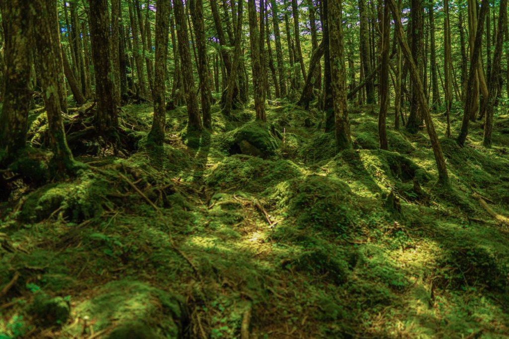 レタッチ前の白駒池で撮影した森林の写真