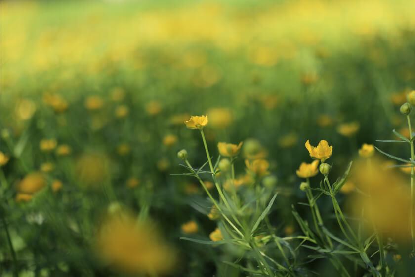 EOS Kiss Mで撮影した花